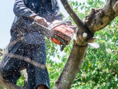 How to Use a Chainsaw Safely for Work